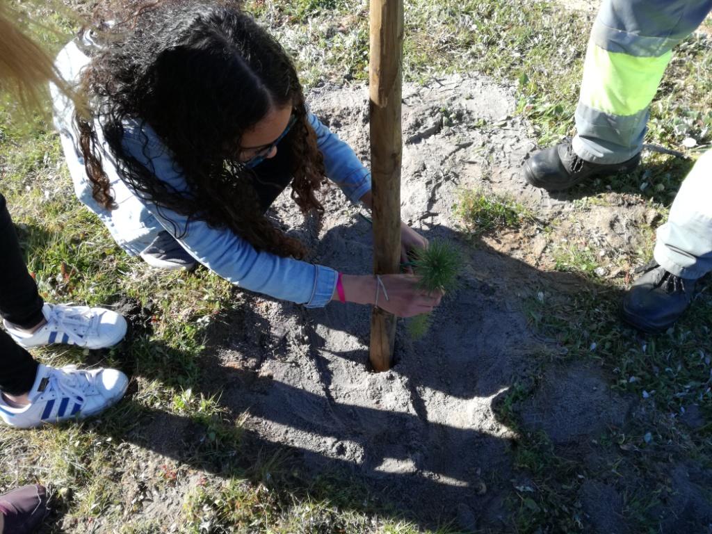 Ação de plantação de árvores