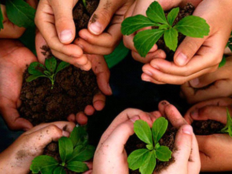 Plantação Árvores Póvoa de Penafirme